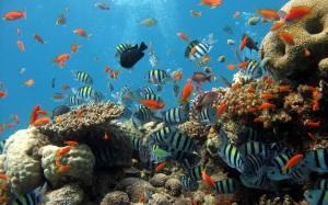 imagenes-de-peces-en-el-fondo-de-mar-y-arrecifes-de-coral_00